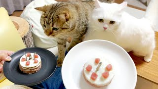 My cats ate up birthday cakes so fast it was too good to pass up!