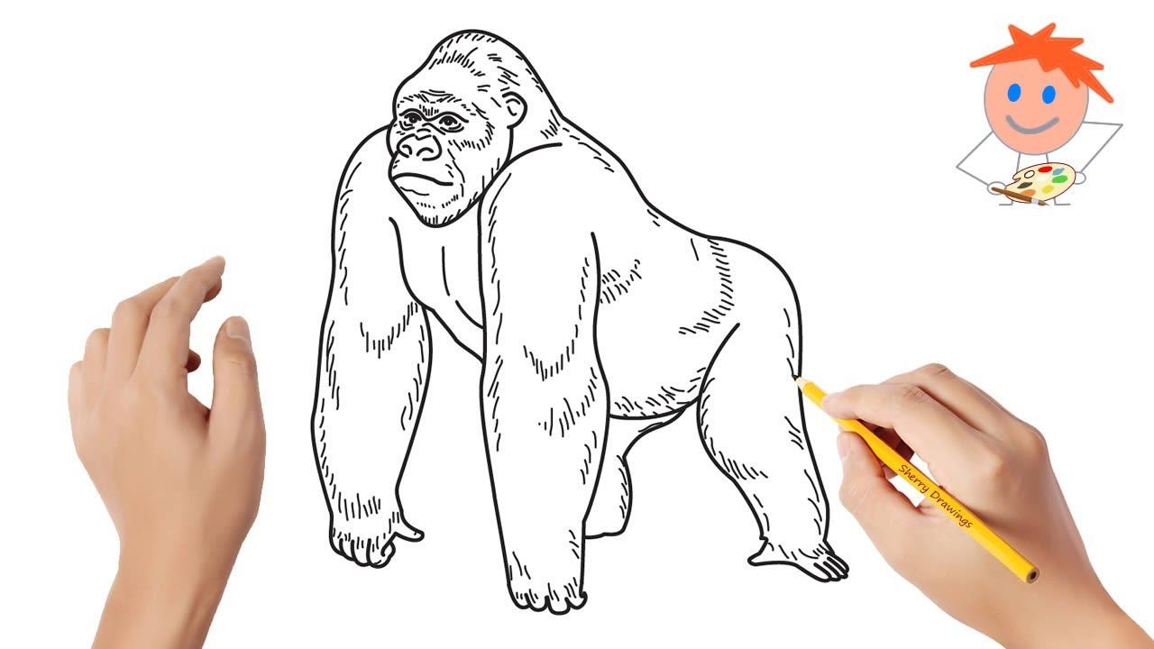 gorilos svorio netekimas