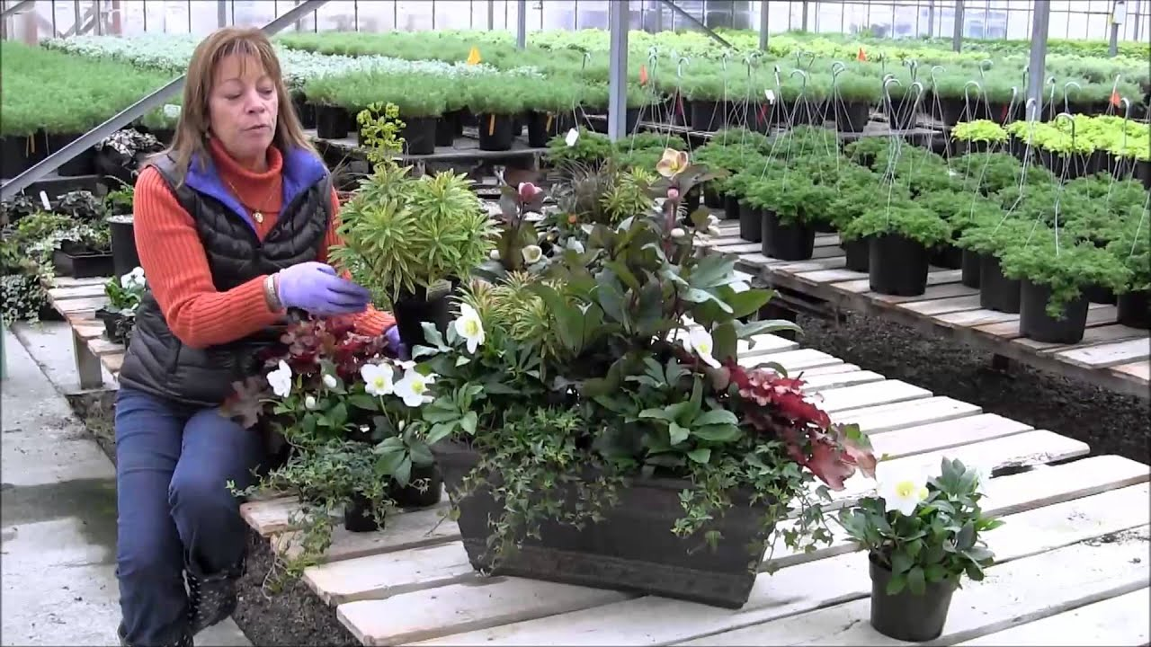 creating a beautiful winter container garden youtube