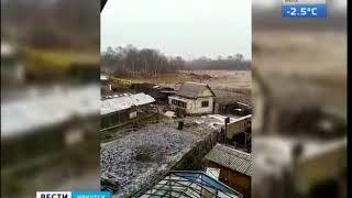 Бродячие собаки продолжают нападать на лошадей под Ангарском