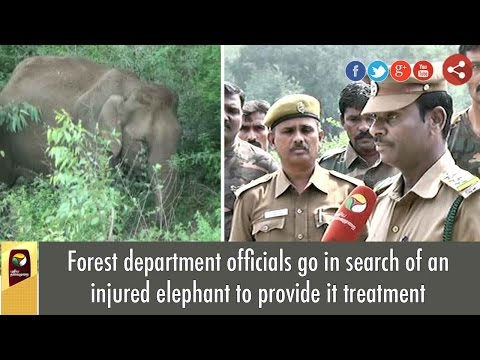 Forest Department Officials Go In Search Of An Injured Elephant To Provide It Treatment