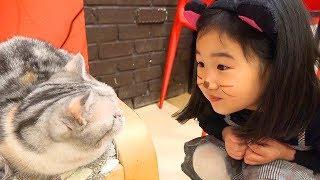 털이 없는 고양이가 있데요! 보람이의 고양이 까페 체험놀이