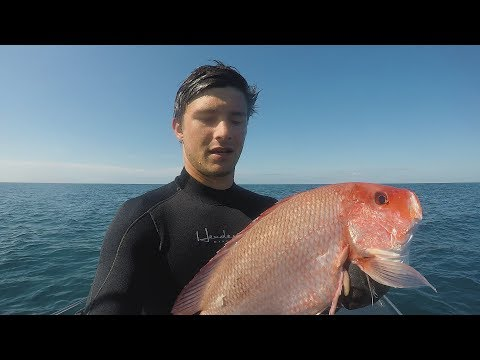 Freedive Spearfishing State Water Texas // SPEARFISHING GULF OF MEXICO 2018