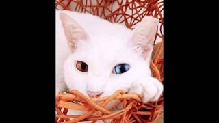 28 фото самых красивых кошек.
