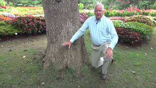 Care about Root Flare - In the Garden with Dave Forehand