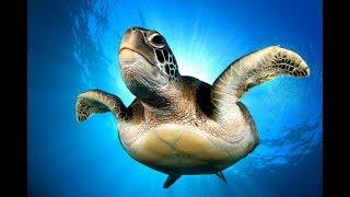 Контактный зоопарк Аквариум ! Плавание с черепахами ! Занзибар Путешествия!
