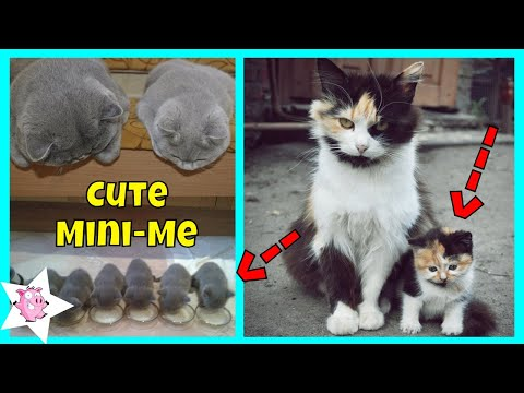 Adorable Cats With Their Cute Mini-Mes | Adorable Cats And Kittens