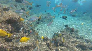 Snorkeling in Adventure Cove Sentosa Island Singapore