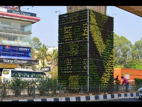 Vertical Garden by SayTrees in Bangalore, India.