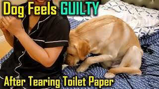 Dog Feeling Guilty After He Tore the Tissue Paper  Guilty Dog Video