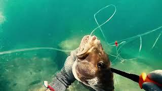 Підводне полювання окунь Кубери і барракуди, Форт-Лодердейл, Флорида