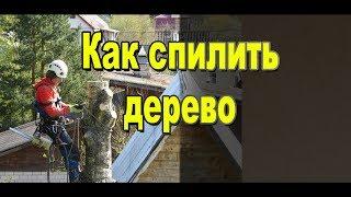Как спилить дерево своими руками / Профессиональная работа арбористов / Видео Sekretmastera