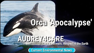 Orca 'Apocalypse'| Current Environmental News | Best Science Learning Videos 4 Kids