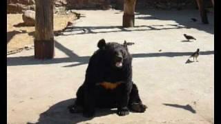 Животные Московского зоопарка 1 часть