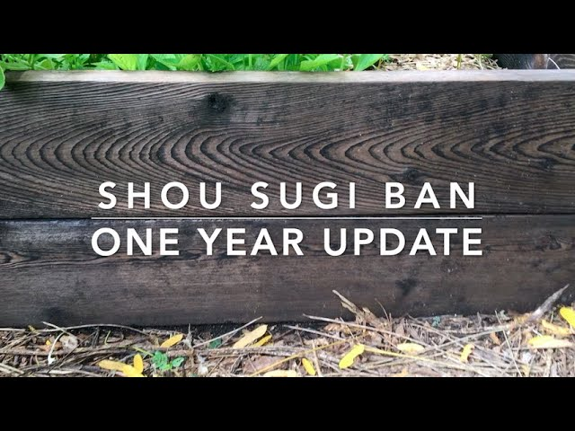 Shou Sugi Ban Organic Raised Beds 1 year Update - DID WE SUCCEED?