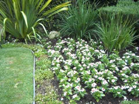 Vinca Pacifica And Bellis Red Pink White Bedding Plant Comboavi