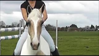 Конный спорт | Лошади