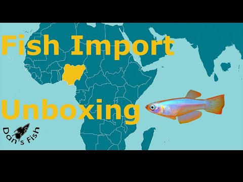 Unboxing Thousands Of African Killifish, Etc.