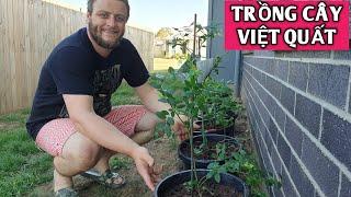 CHỒNG ÚC CHỈ CÁCH TRỒNG CÂY VIỆT QUẤT | How to plant blueberry| Vợ Việt Chồng Tây | Vườn Rau Việt 65