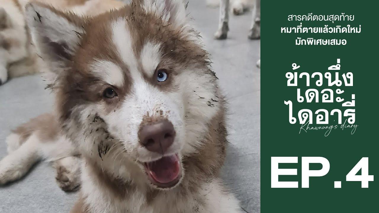 ข้าวนึ่ง หมาที่ตายแล้วเกิดใหม่ มักพิเศษเสมอ - ข้าวนึ่งเดอะไดอารี่ EP.4