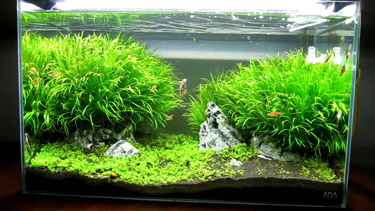 Ada 60p Iwagumi Style Growth Update Youtube
