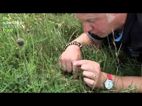 A short film on grass identification