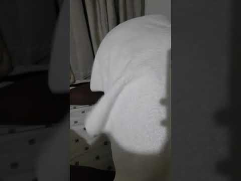 big big Ass im horny somali bitch can i realy twerk thumbnail
