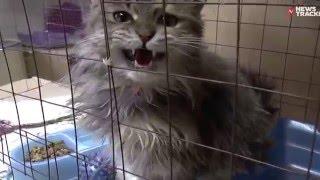 Приют для бездомных животных в Ставрополе. Отстрел бездомных собак и кошек
