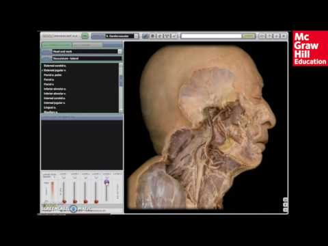 Anatomy Physiology Revealed Overview Youtube