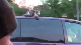 高速道路に子猫が出没!警官が駆け付け無事保護される(アメリカ)