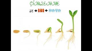 Çimlenme, Tohum-Tohumun yapısı- Bitkilerin yaşam döngüsü (Slayt-Sunu İndir)