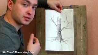 Как рисовать Осеннее Дерево и его Кору