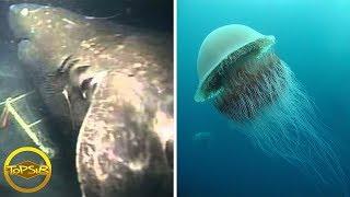 10 สิ่งมีชีวิตใต้ทะเลสุดลึกลับและแปลกที่สุดเท่าที่เคยมีมา (แปลกจริง)