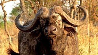 Repeat youtube video Tanzania: Serengeti Part 1