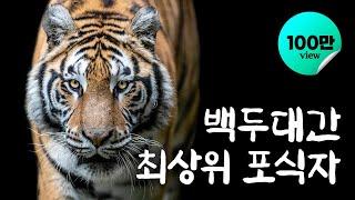 백두대간 최상위 포식자 이야기 / YTN 사이언스