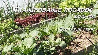 Смешанная посадка различных овощей на грядке.