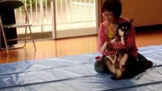 我が家のMix犬 空(sora)の成長記録 http://mixsora115.blog.fc2.com/b...