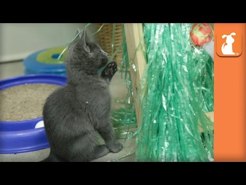 Hula Kitten - Kitten Love