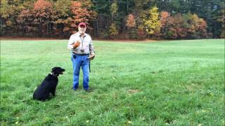 Train your retriever to deliver to hand