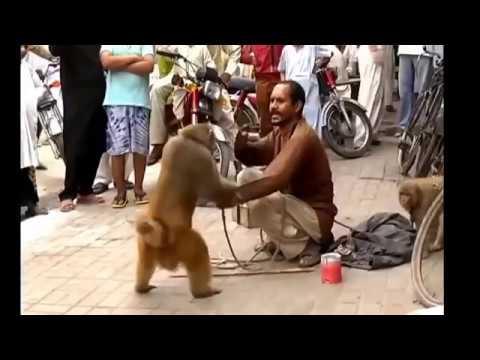Video Lucu 2016 monyet vs manusia n anjing