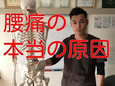 【腰痛 治し方】人体解剖をしてわかった腰痛の本当の原因
