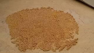 как сделать семена баклажан своими руками