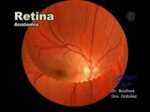 Anatomía de la retina - YouTube