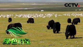 《绿色时空》 20190602 生态高原 绿色梦想| CCTV农业