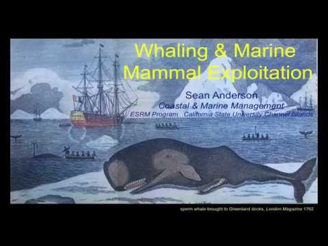 History of Whaling