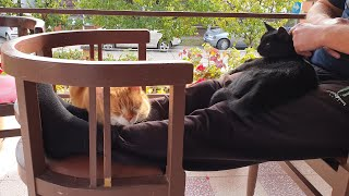Cats Like Spending Time With Their Daddy thumbnail