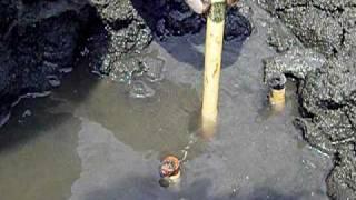 多摩川河口 干潟 アナジャコ 筆釣り