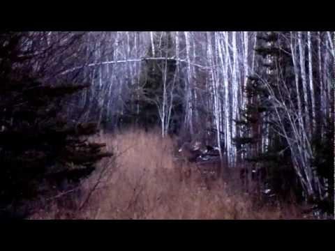 Upper Peninsula Michigan Wolves and Bucks, Opening Day Rifle, 2012