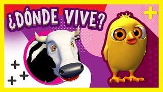 ¿Dónde vive el Pollito Pío? La Vaca Lola y más Animales ...