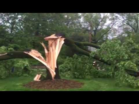 Lightning split a tree in front of Immaculate Heart Academy in Washington Township.